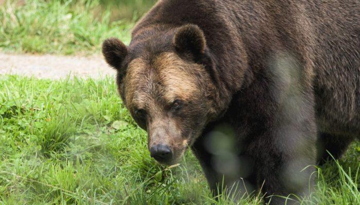 Bitcoin Bearish