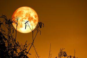 bitcoin harvest full moon astro crypto