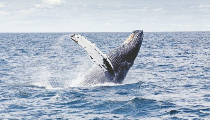 Whales Are Building Their Positions On Derivatives